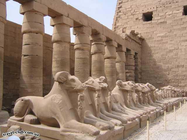 Египет  Достопримечательности  Карнакский храм (Луксор)  Интересное стадо баранов сидит в тени