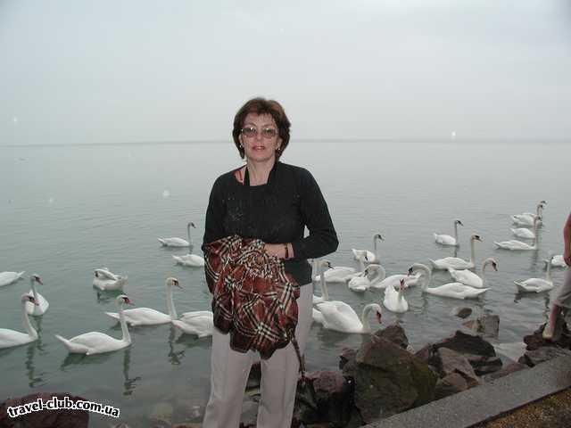 Венгрия  Будапешт  Argo  Балатонфюред, на фоне знаменитых лебедей