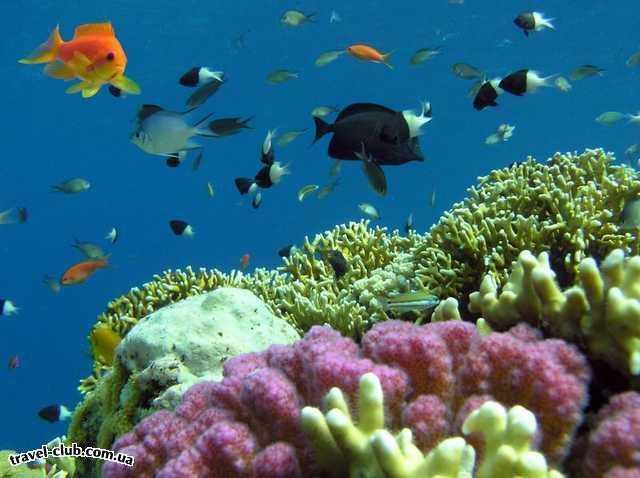 Египет  Красное море  Coral Beach Tiran  На рифе