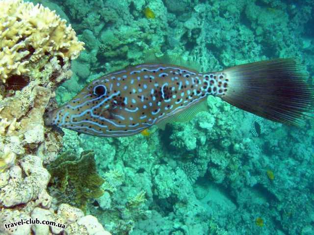 Египет  Красное море  Coral Beach Tiran  Может кто знает, как он обзывается?