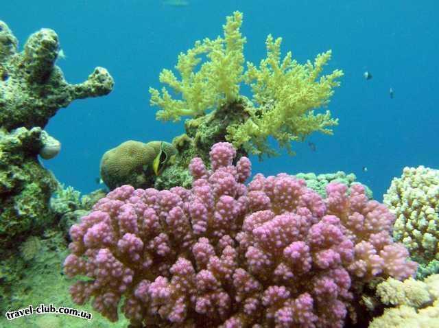 Египет  Красное море  Coral Beach Tiran  Кораллы