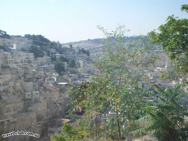 Израиль  ашдод  Гиена огненная