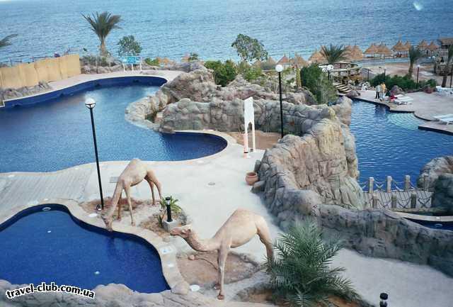 Египет  Шарм Эль Шейх  Sheraton 5*  зоопарк :-)
