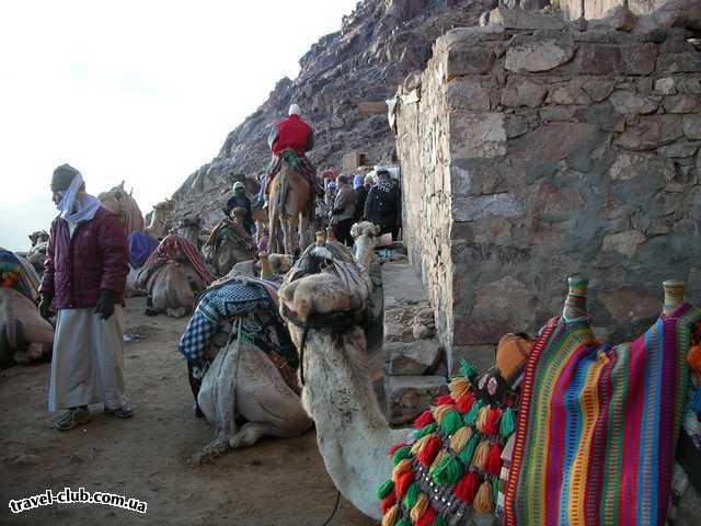 Египет  Шарм Эль Шейх  Sheraton 5*  Ужасные бедуины и ужасные верблюды. Бедуины просят ден