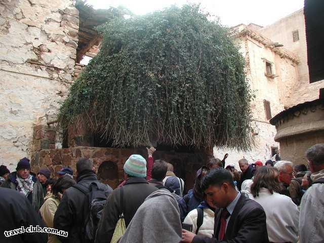 Египет  Шарм Эль Шейх  Sheraton 5*  Монастырь Святой Екатерины - Неопалимая купина