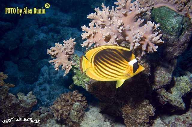 Мальдивские о-ва  Laguna Maldives