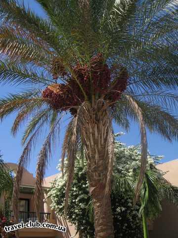Египет  Хургада  Aladdin 4*