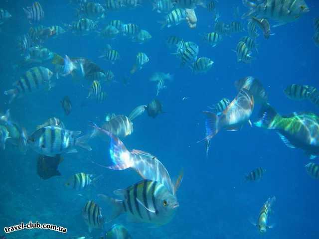 Египет  Шарм Эль Шейх  Coral beach tiran 4*  подкормил