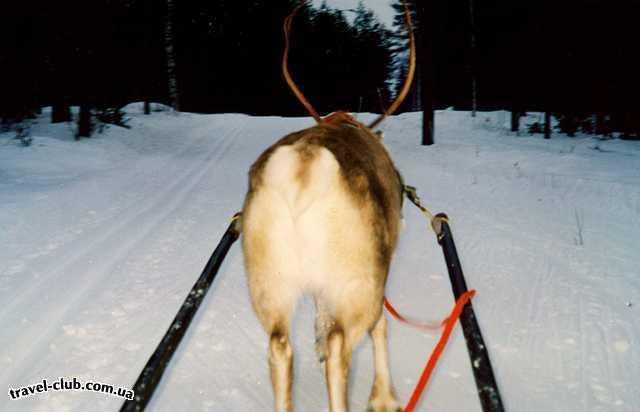 Финляндия  Вези меня,олень, в свою страну олению!