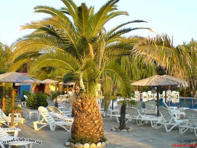 Греция  Халкидики  Poseidon 4* ( Sitonia )  Утро вид на бассейн
