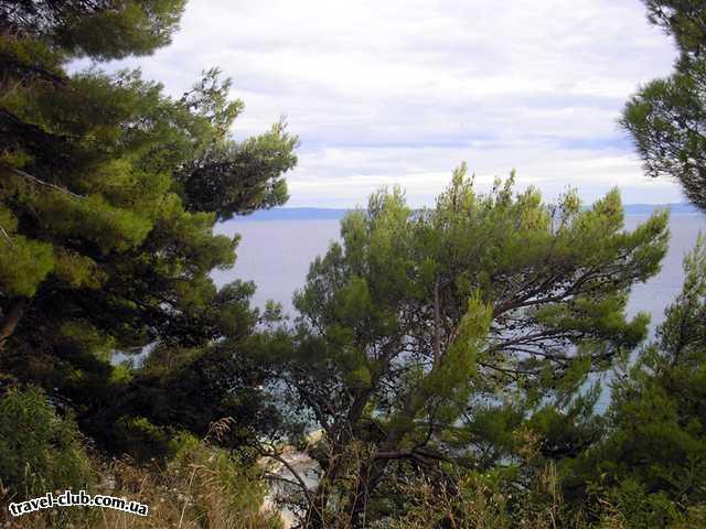 Хорватия  макарская ривьера, курорт башка вода  альпийские сосны