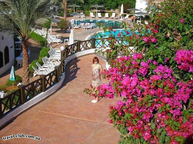 Египет  Шарм Эль Шейх  в отеле