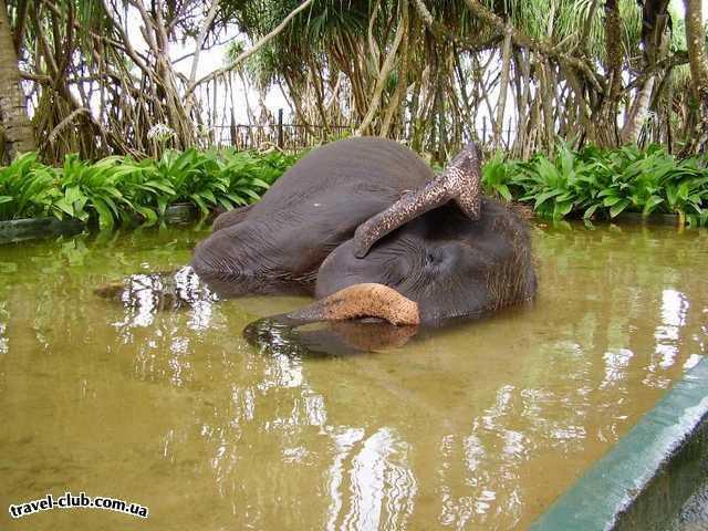 Шри-Ланка  Ванна в отеле для слона.