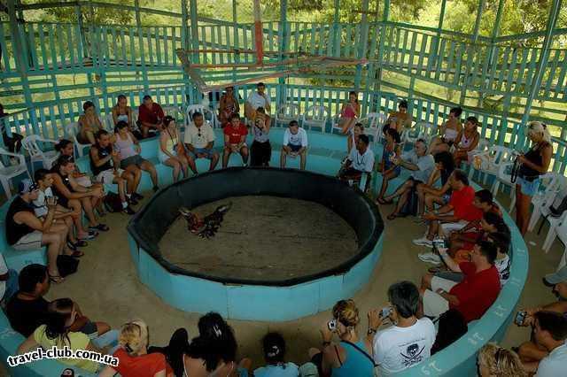 Доминикана  Punta Cana  Петушиные бои на экскурсии LAGUNA LIMON vip.