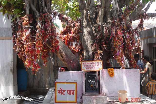 """Индия  """"дерево желаний"""" рядом с одним из делийских храмов"""
