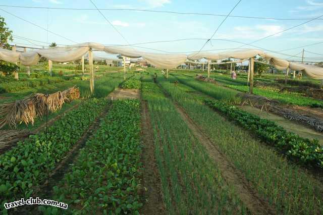 Вьетнам  Сайгон  Фермерское хозяйство одной отдельно взятой деревушки