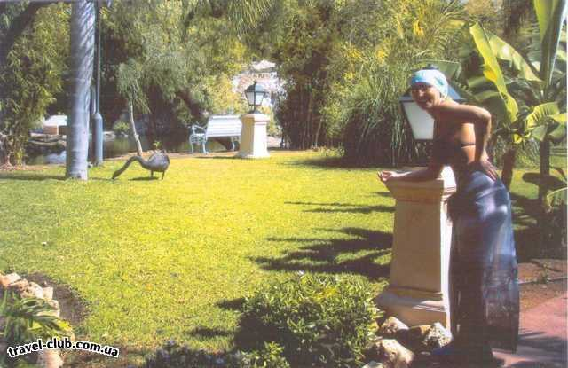 Испания  Тенерифе  лебеди ходят и шипят на тех, кто их боится