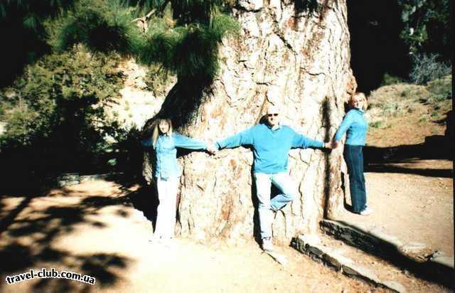 Испания  Тенерифе  Возможно, вы поднимитесь на гору Тейде. А по пути посмо�