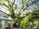 Мальдивские о-ва  Мале  Гнездо любви в Султан-парке